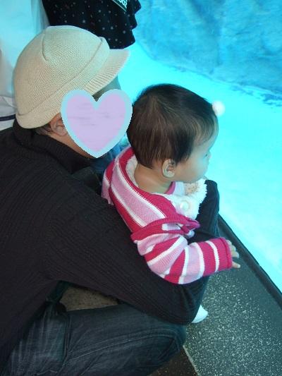 水族館の魚に釘づけの1歳児