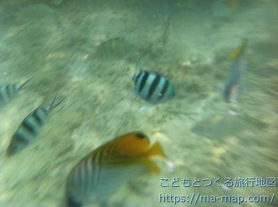 米原ビーチ 魚