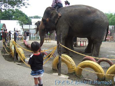 3歳 おすすめお出かけスポット 動物園
