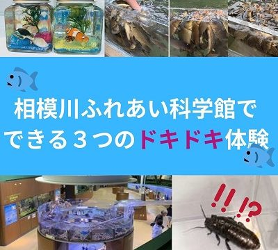 相模川ふれあい科学館